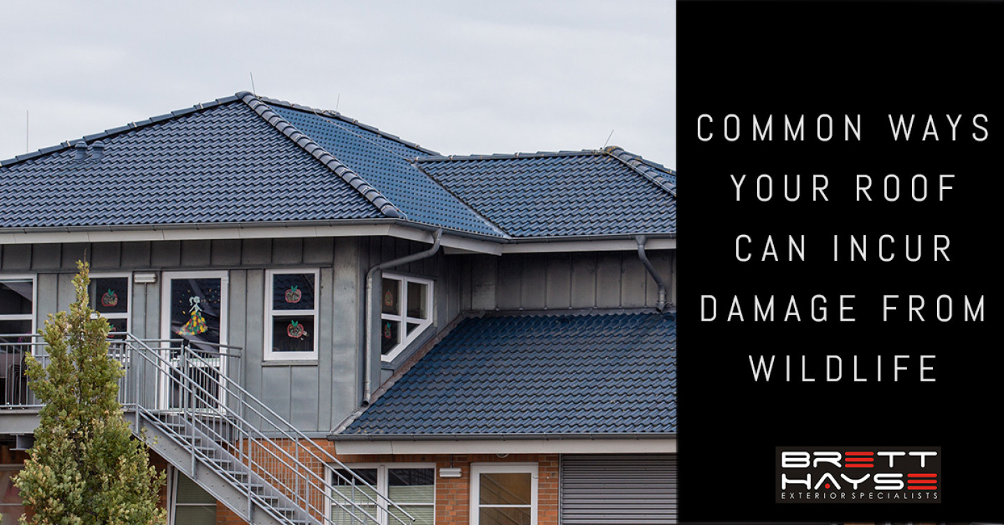 Common-Ways-Your-Roof-Can-Incur-Damage-From-Wildlife-5c5dbcad65418